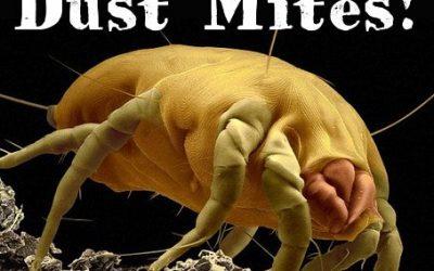 Dust Mites & Why We Need Norwex Mattress Spray