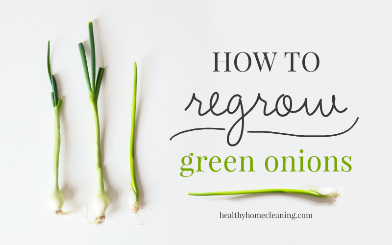 How to regrow green onions in just water!