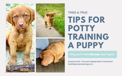 Tips for Potty Training a Puppy – Why You Need Norwex Sportzyme